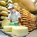 Сыровары России воспротивились возвращению итальянского пармезана