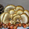 Российские эксперты ожидают взлета цен на орехи и грибы