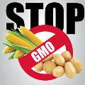В Госдуму внесен законопроект о запрете на выращивание ГМО в России